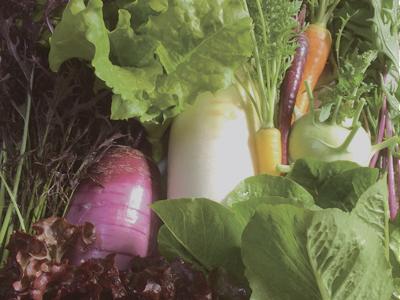 おすすめ有機野菜